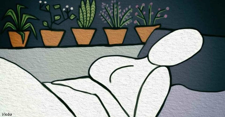 6 растений для спальни, которые помогут вам уснуть как младенец
