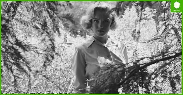 Вот редкие фото Мэрилин Монро в лесу до того, как она стала знаменитой