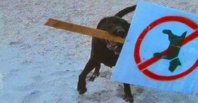 30 гордых животных бунтарей, которым нет дела до человеческих правил