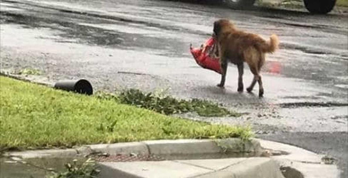 Когда начался ураган, этот пес собрал свою еду и эвакуировался. Сам!