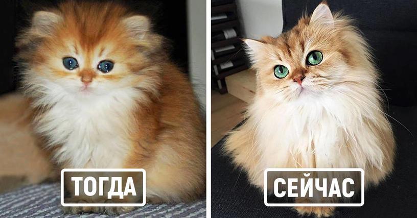 25 фотографий милейших котиков До и После того, как они повзрослели
