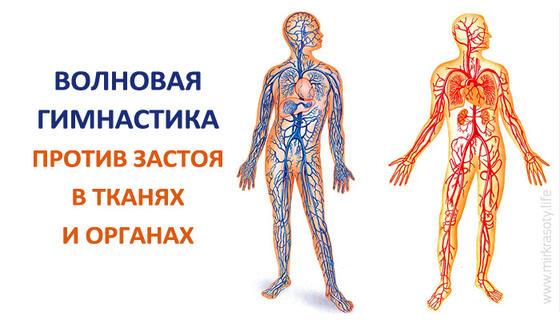 Волновая гимнастика против застоя в тканях и органах