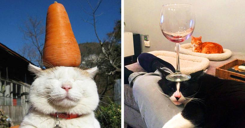 Когда коты хотят отдохнуть, их ничто не беспокоит — даже это!