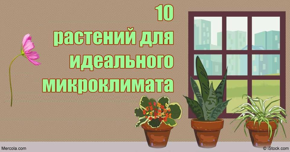 10 растений, которых хватит, чтобы воздух в квартире был идеальным