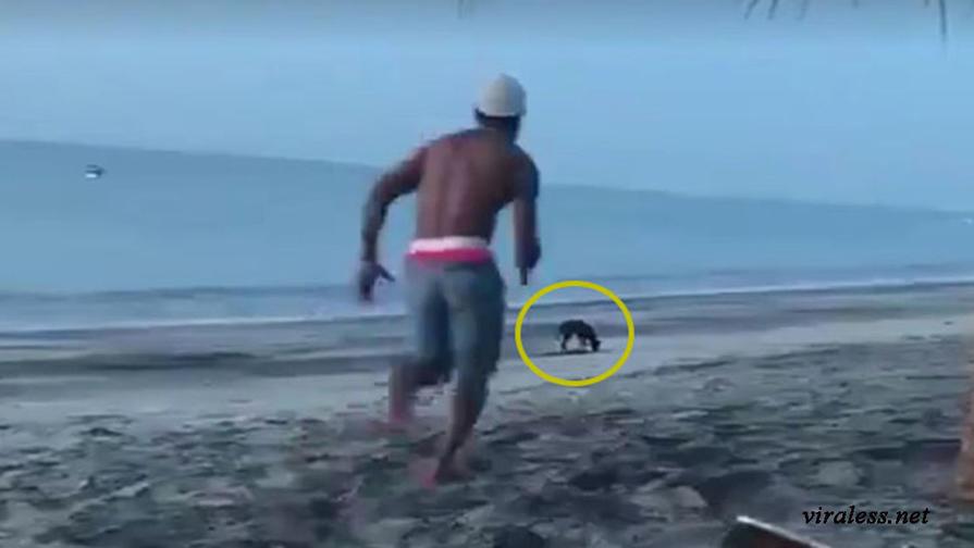 Он хотел убить на пляже бродячего пса. И мгновенно получил порцию Кармы!