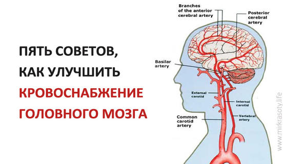Секс улучшает кровообращение в головном мозге