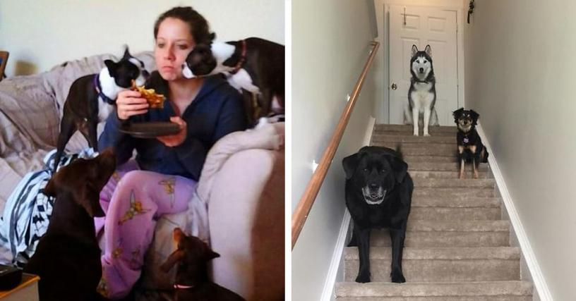 23 фотографии людей, которые живут под девизом «чем больше животных, тем лучше»