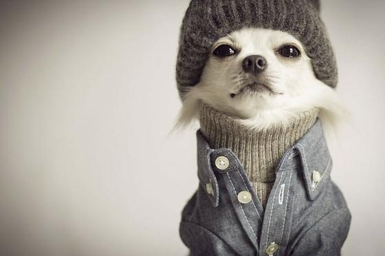 25 собак, в которых вы однозначно узнаете кого-то из ваших знакомых