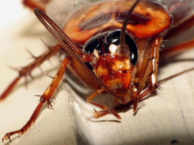 Вот несложный, неопасный и недорогой способ раз и навсегда покончить с тараканами!