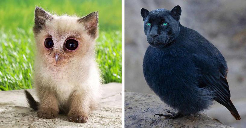 Эти удивительно симпатичные гибриды котов и птиц, созданные в фотошопе, сделают ваш день