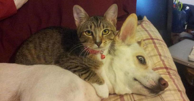 25 очаровательных котов и собак, каким-то чудом уживающихся вместе