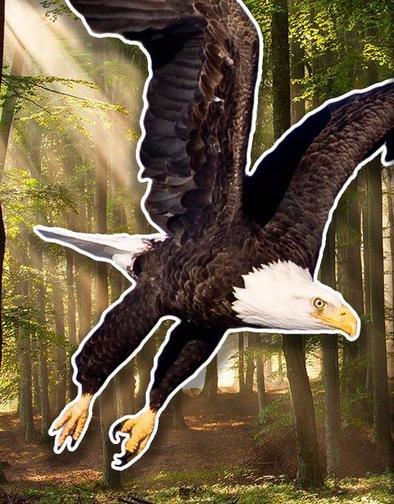 Пернатый Зодиак: вот что говорит о вас птица вашего месяца