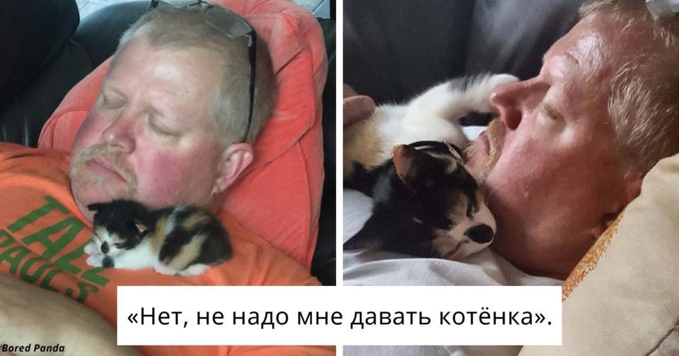 30 мужчин, которые говорили, что не хотят ″никаких чертовых котов″