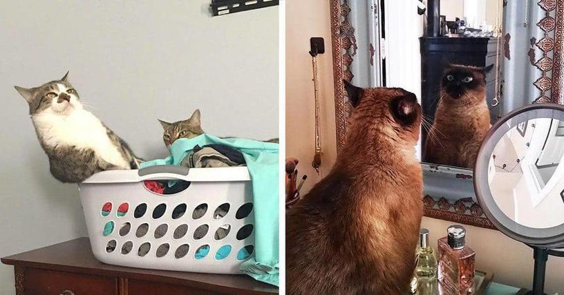 20 прелестных фотографий, которые демонстрируют, за что мы так любим котов
