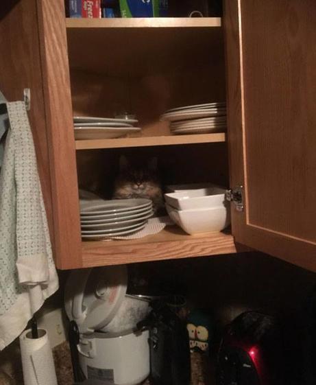 15 смешных ситуаций из жизни котиков, которые невероятно похожи на людей. Просто у нас шерсти меньше