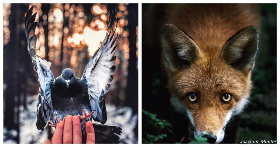 Финский фотограф как то убеждает лесных животных позировать для его снимков