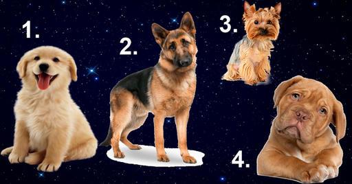 В год Желтой Собаки выбранный пес расскажет какой мужчина для вас идеален
