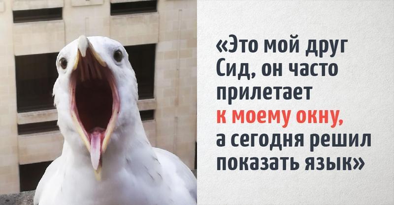 Пользователи интернета поделились снимками необычных посетителей, которые постоянно поджидали их за окном, и отвертеться от их дружбы было не так то просто