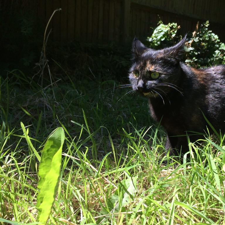 Кошка каждый день приносит своему хозяину лист по необычной причине, которая доказывает, что котики действительно умны