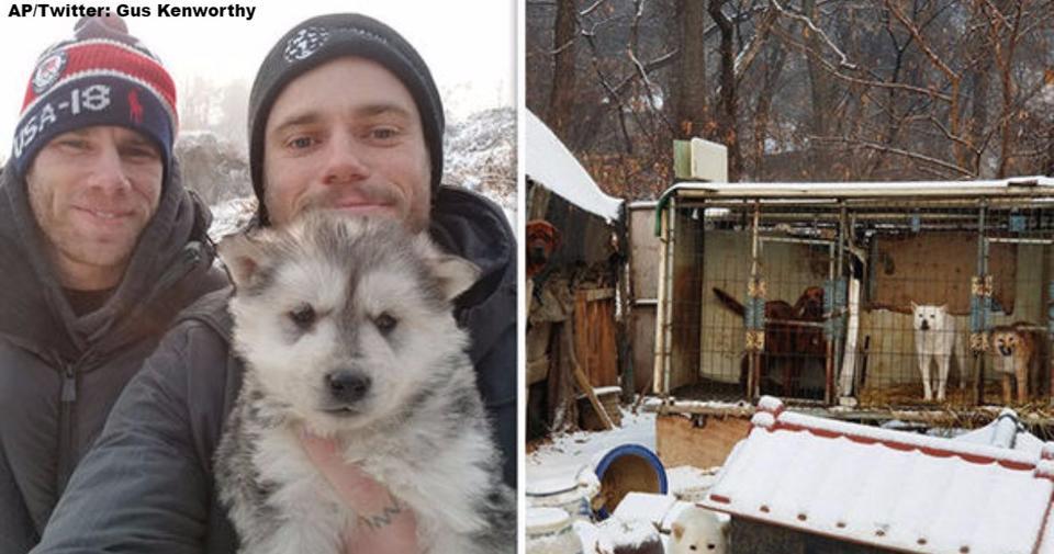 Олимпийский лыжник 90 собак в Корее после того, как сходил на мясную собачью ферму