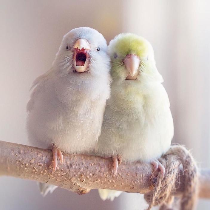 Я документирю историю любви своих попугаев. Эти фото растопят даже самое суровое сердце