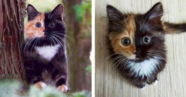 Яна  кошка сдвумя лицами!