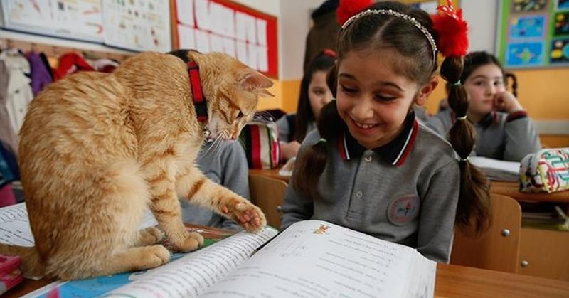 В одну из школ Турции просто взял и пришёл кот. Многие были против животного, живущего в классе, но он и не думал уходить
