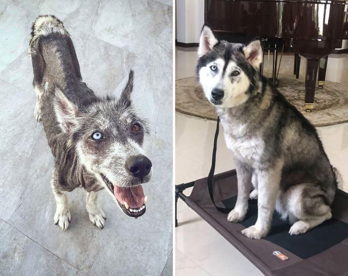 25 фото животных до и после того, как они нашли свой дом и любящих хозяев