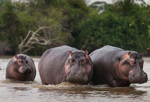 25 случайных фактов о случайных животных для людей, которые любят случайности