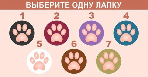 Выберите лапку и узнайте, какой вы кот!