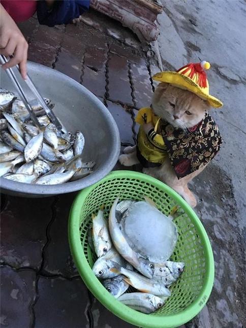 На вьетнамском рынке замечен необычный продавец рыбы. И он настолько милый, что хочется унести его вместе с покупками