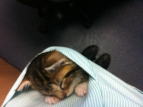 29 фото о том, насколько все-таки круто быть ветеринаром!