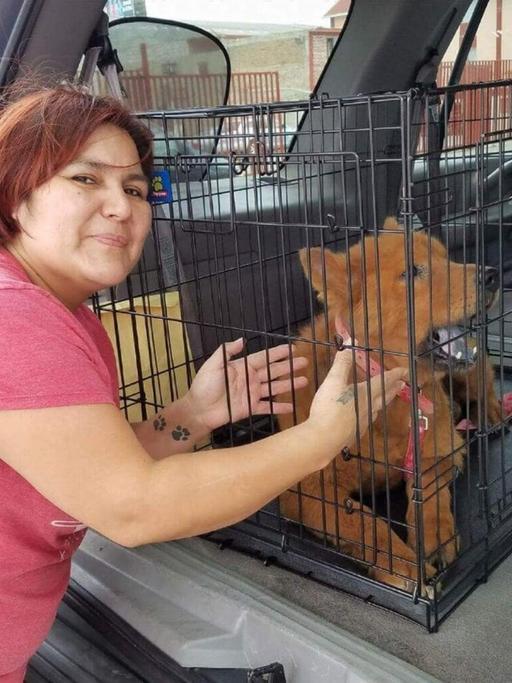 Женщина нашла под своей машиной напуганного лысого пса и решила спасти бедное животное. Спустя два месяца он превратился в шикарного пушистого красавца
