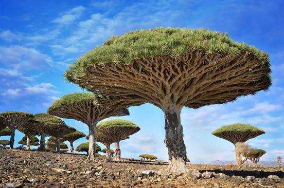 20 самых странных деревьев в мире, которые могли бы даже спасти нашу жизнь Природа круче любых спецэффектов!
