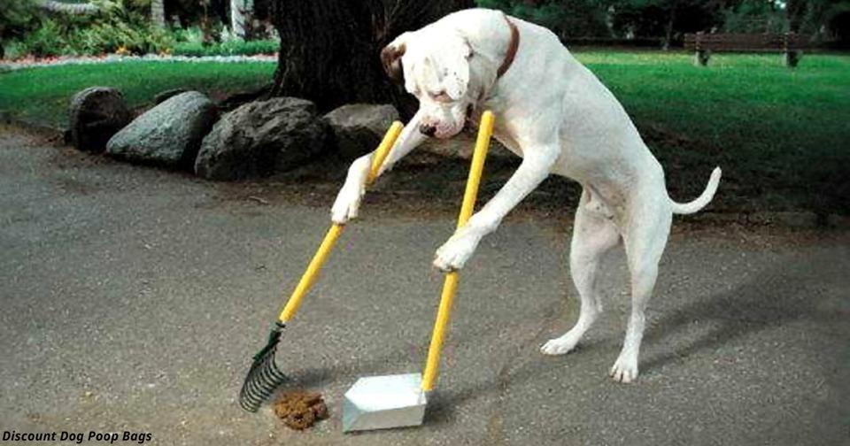 Украинцы, не убирающие за своими собаками, будут платить штрафы - по  за раз Поддерживаете?