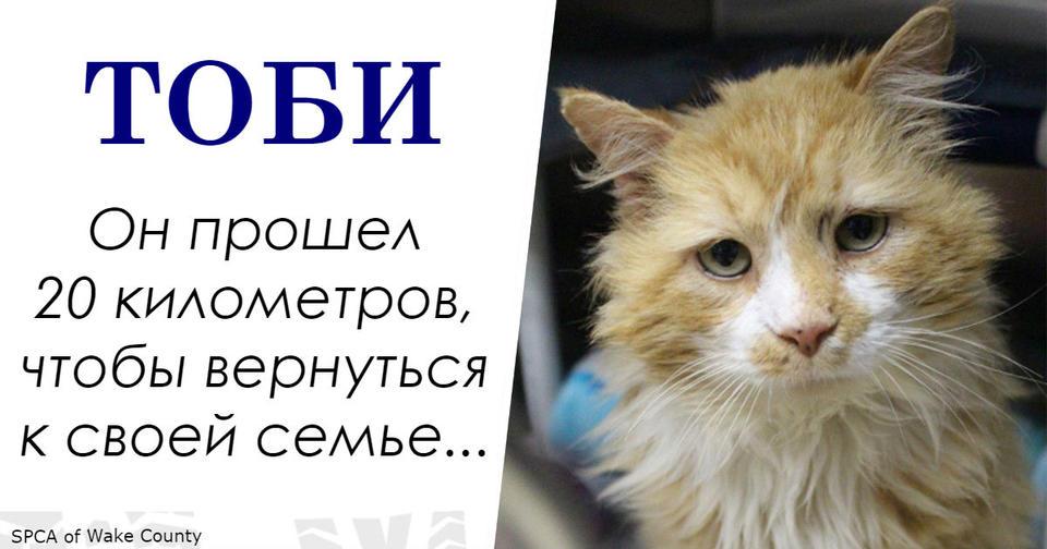 Этот кот прошел 20 км, чтобы вернуться домой. Но в семье его решили усыпить! История кота Тоби.