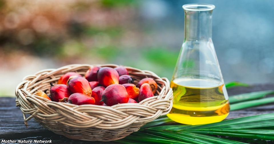 В Украине запретили пальмовое масло! Вот почему Прощай, фальшивый сыр и ненастоящее молоко?