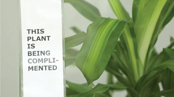 IKEA попросила школьников 30 дней оскорблять растение. Вот что с ним было дальше Задумайтесь!