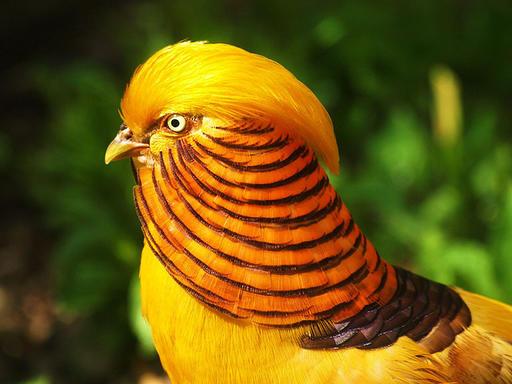 Вот 10 самых красивых птиц планеты, о которых вы, скорее всего, даже не слышали! Вот так красавцы!