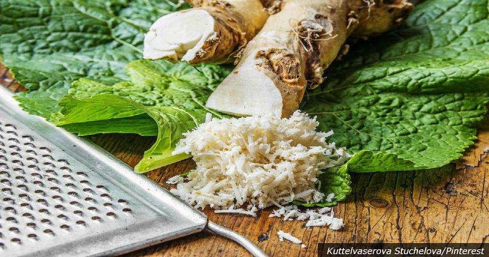 Хрен – единственное растение, способное поглощать соль из организма! Вот почему это важно Не доведите до остеохондроза!