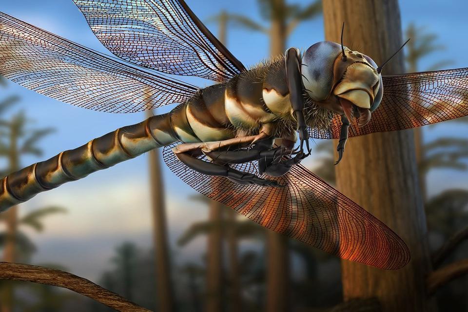 Самое крупное насекомое в истории Земли было гигантской «стрекозой». И она ела динозавров!