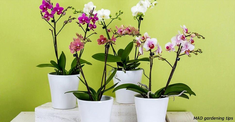 10 правил, чтобы орхидея цвела снова и снова. И каждый раз   все круче и круче! Ей нужен правильный уход   и все.