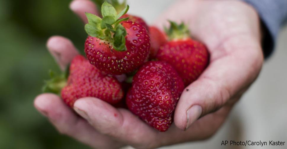 12 фруктов и овощей, в которых обычно больше всего пестицидов! Полный список.