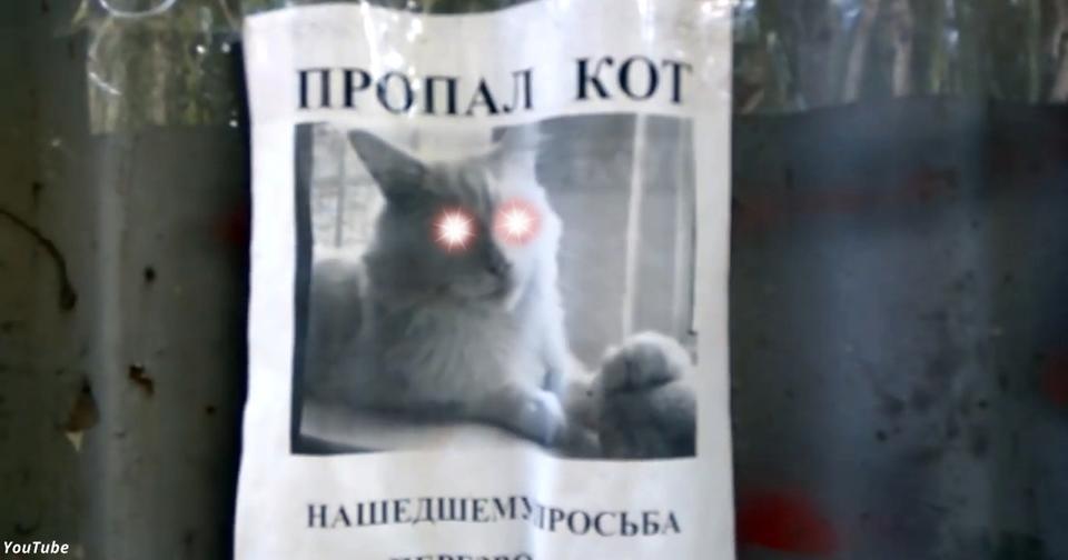 Кот на этом объявлении следит за теми, кто на него смотрит! Вот видео Он уже стал мировой сенсацией.
