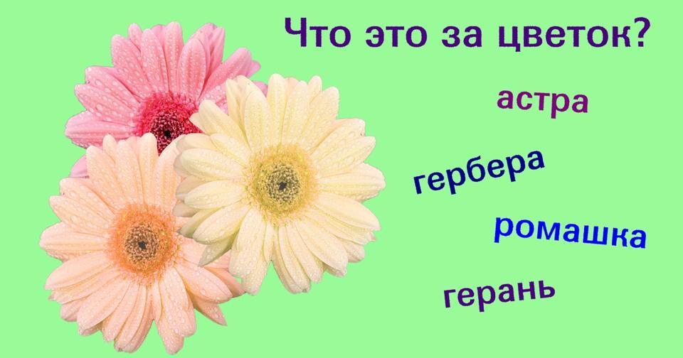 Только 3% женщин знают все эти 20 цветов! Сколько знаете вы? О мужчинах промолчим.