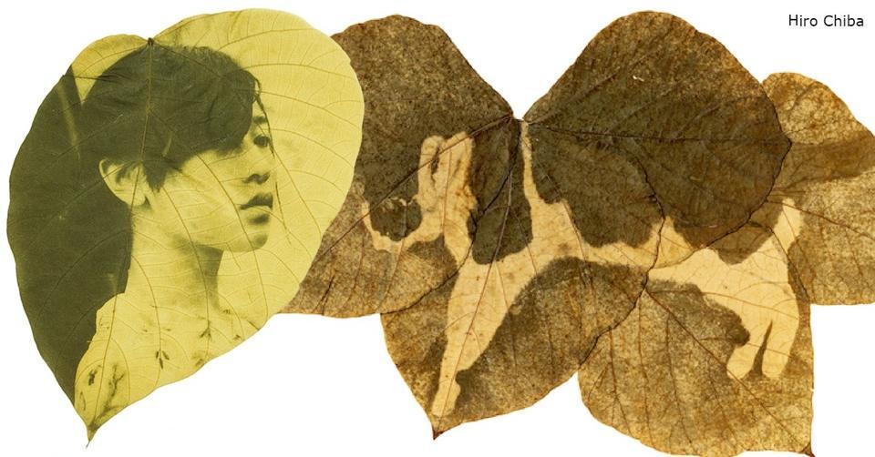 Японка печатает фотографии на листьях деревьев… Вот что получается Хм, такого еще не было!