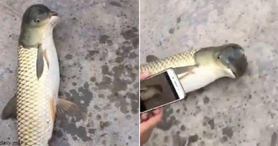 Вот такую рыбу мутанта поймали рыбаки в Китае! Что происходит?! Не фейк!