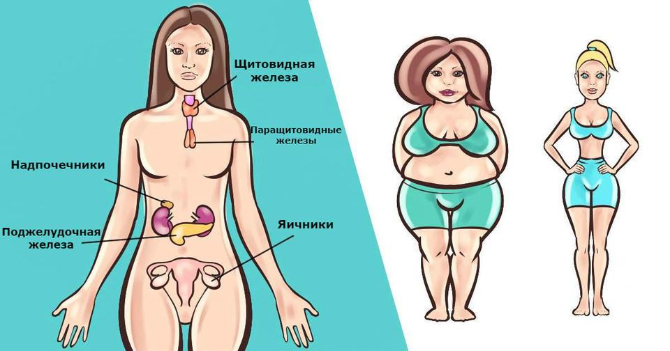 Какие гормоны мешают похудеть женщине? — Все диеты
