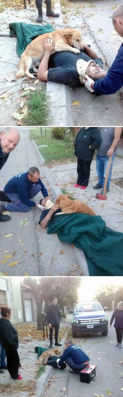 25 душераздирающих фото собак, которые покажут, что такое любовь на самом деле Душещипательно!