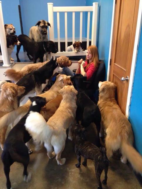 35 фото собак, которые выпрашивают еду ТАК, что вы отдадите им все! ″Ну дай, ну дай...″